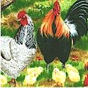 BI-farm-P154
