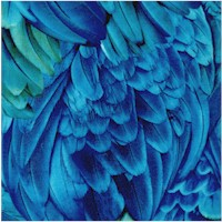 Imaginings - Gorgeous Feathers Up Close