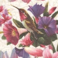 BI-hummingbirds-R774