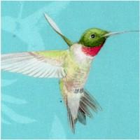 Island Sun - Beautiful Hummingbirds on Blue