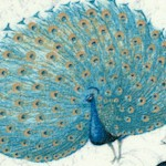 Majestic Beauties - Gorgeous Tossed Peacocks on Display by Daphne B.