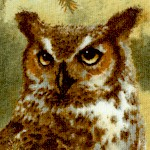 Owls of Wonder