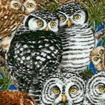 Owl Families - Owls in Nests by Tracy Lizotte