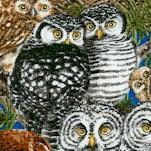 BI-owls-X555