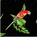 BI-parrots-P909