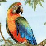 Born Free Parrots