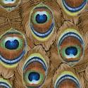 BI-peacock-U520