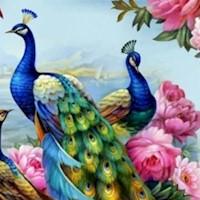 BI-peacocks-R813