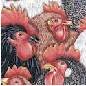 BI-rooster-B331