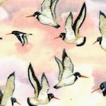 BI-seagulls-W799