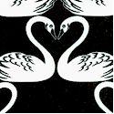 BI-swans-P716