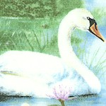 Four Seasons Wee Wildlife - Graceful Swans and Waterlilies