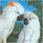 Macaws & Cockatoos