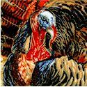 Real Turkeys Up Close