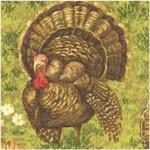Turkeys in the Grass