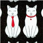 CAT-cats-X54