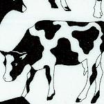 AN-cows-W215