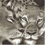 Lion Eyes in Shades of Gray