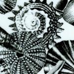 FISH-shells-W125