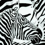 AN-zebras-W217